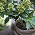 Ako zazimovať rastliny v kvetináčoch