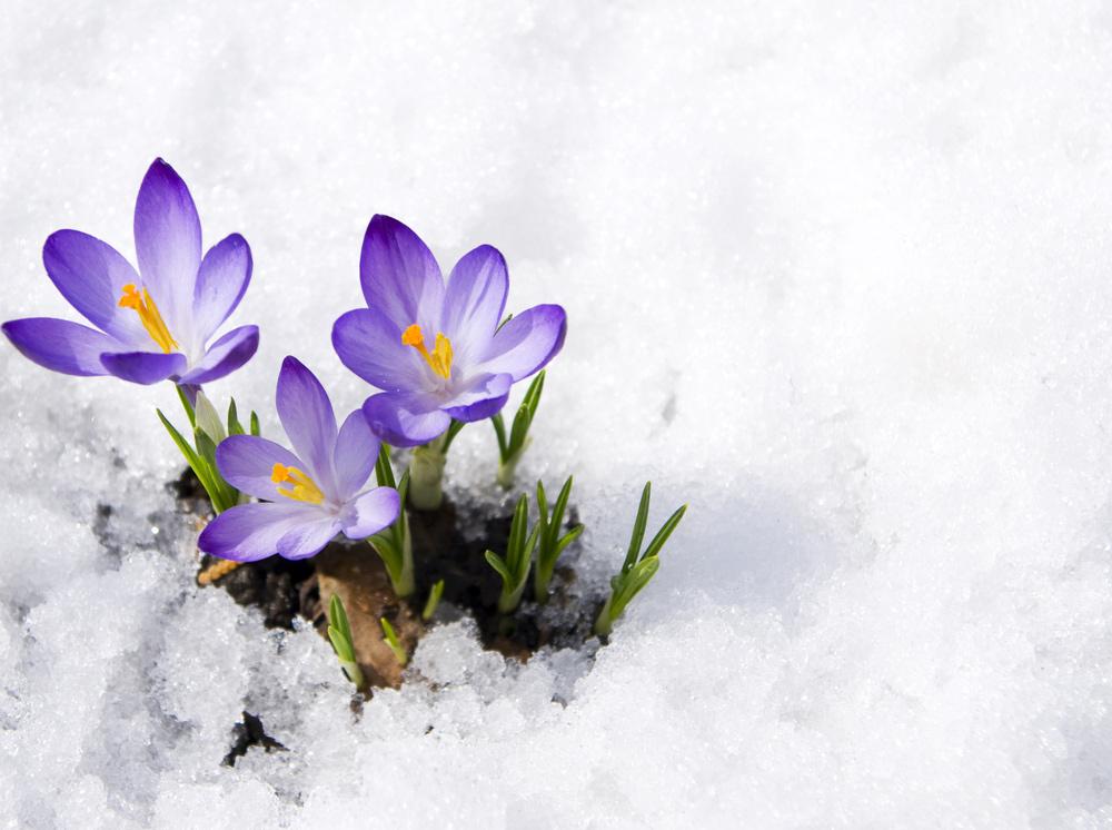 Február v záhrade
