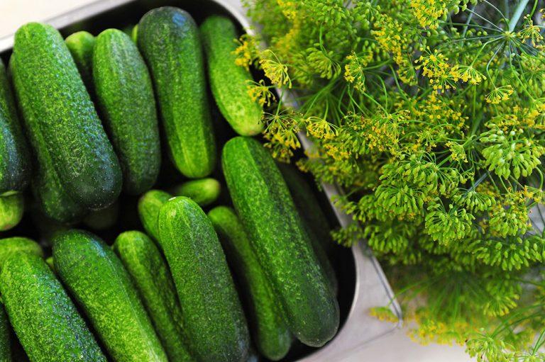 Uhorka - zelenina, ktorá lieči