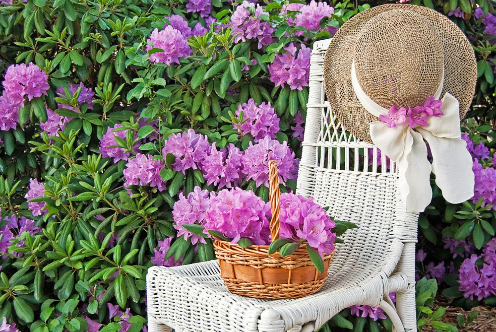 Myslíte si, že dopestovať krásny rododendron je náročné? Nie s týmto postupom