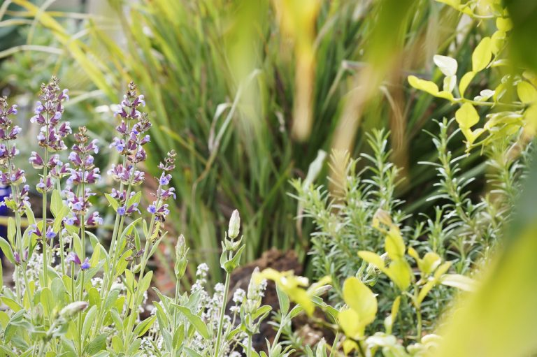 Zakladáme bylinkový záhon