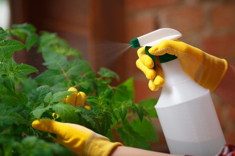 Domáce prípravky proti škodcom v skleníku