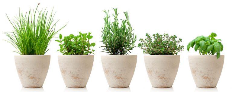4 kroky k zdravým a voňavým bylinkám