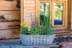 Osviežte balkón kvetinami, ktoré vydržia celé roky