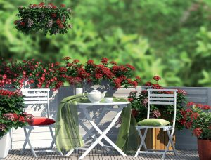 Leto s kvetinami si môžeme užiť aj na terase