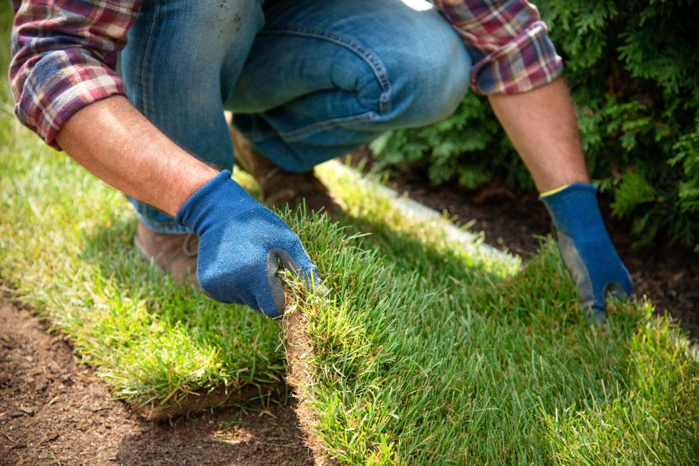 Ako si položiť trávny koberec