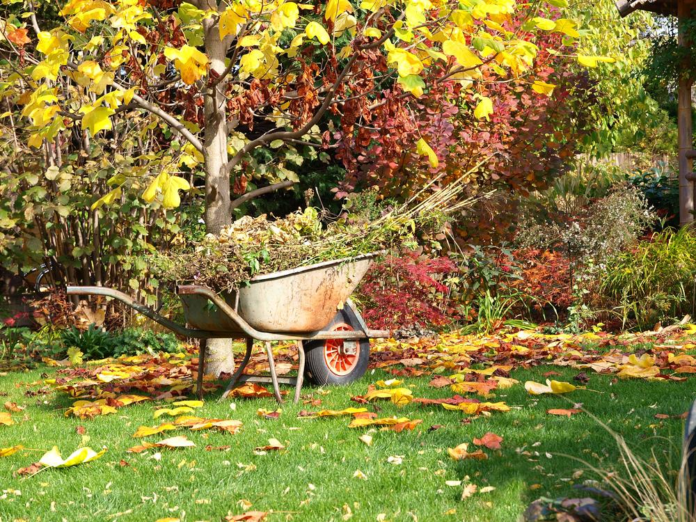 Október v záhrade