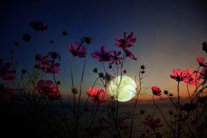 Lunárny kalendár jún