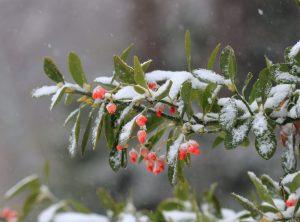 Január v záhrade