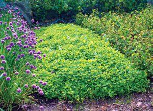 Zelené hnojenie: Ideálny spôsob, ako záhradkárčiť ekologicky