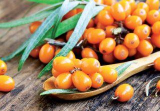 Rakytník: Dokonalý liek, ktorý si dopestujete v záhrade