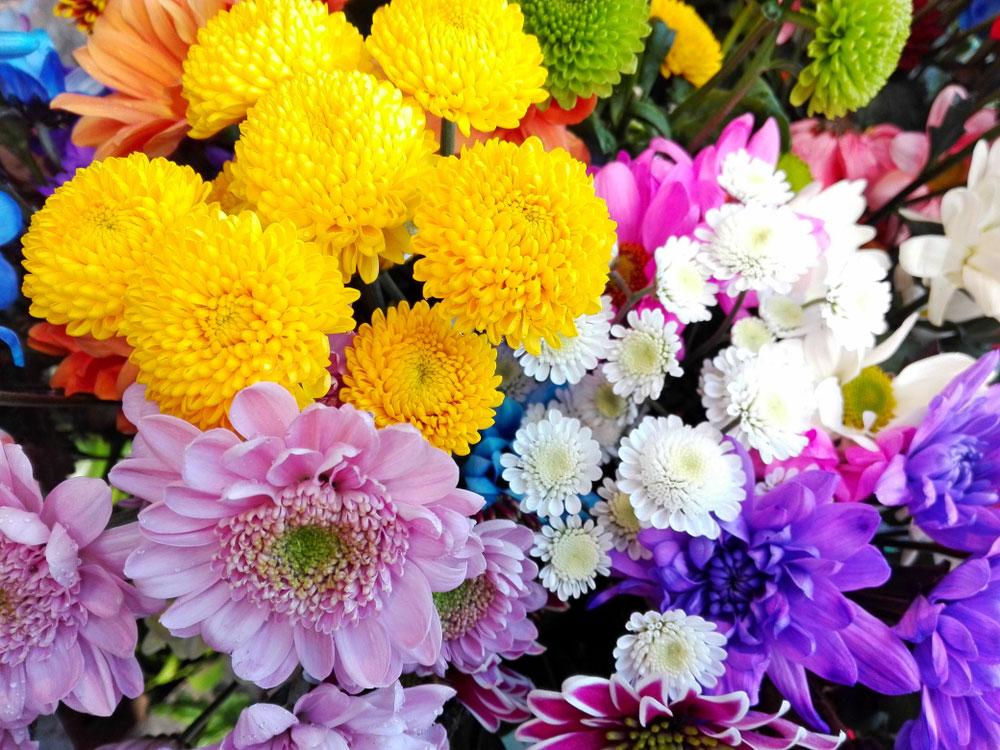 Pestovanie chryzantém: Na čo by ste rozhodne nemali zabúdať?