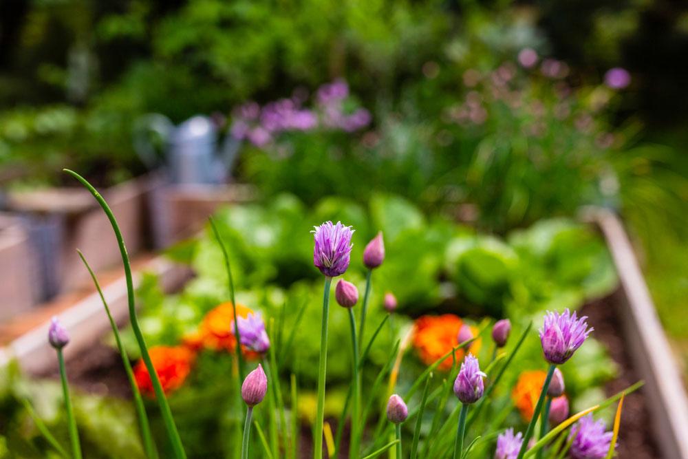 Symbiotická záhrada