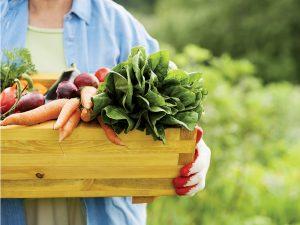 Krok za krokom: Koniec sezóny v zeleninovej záhrade