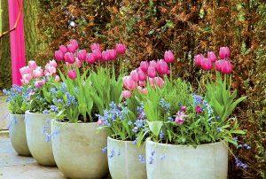 Takto si pripravíte rozkvitnutú jar už teraz