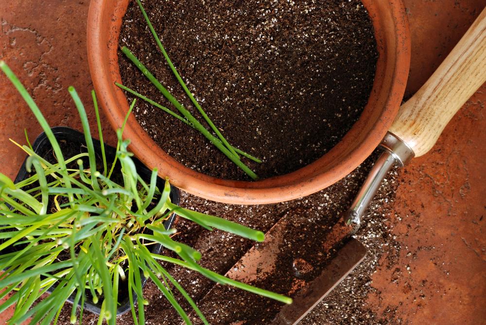 11 krokov k čerstvej pažítke z okenného parapetu