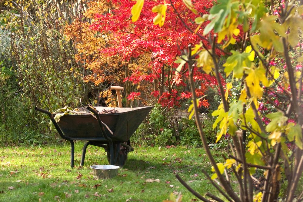 Krok za krokom: Pripravujeme záhradu na zimu