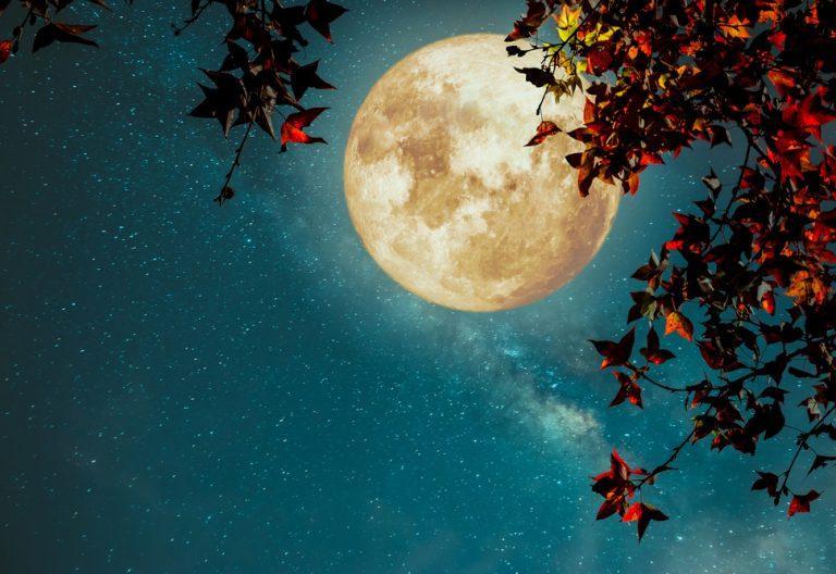 Lunárny kalendár pre záhradu a domácnosť - november 2017