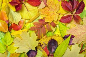 Karneval pestrých farieb v záhrade? Postarajú sa oň tieto listy