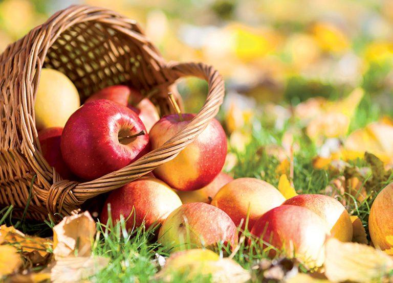 Rezistentné jablone: Pestovanie bez postrekov