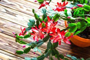 5 skvostov zimných záhrad, ktorým studený vzduch prospieva