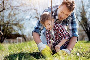 Čo by ste mali vedieť o výsadbe ovocných stromov