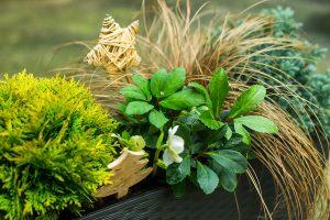 Balkón sa môže zelenať aj počas chladných dní