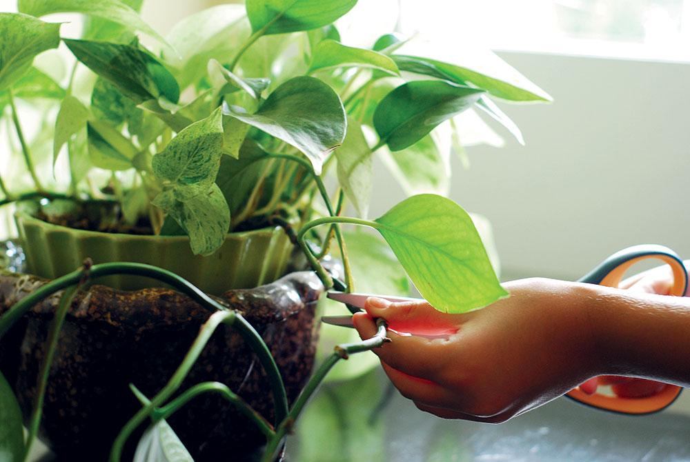 Izbovky: Kúpa nie je jedinou možnosťou, ako získať nové rastliny zadarmo