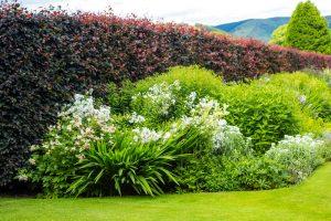 Zabudnite na tuje! Takýto živý plot ozdobí každú záhradu