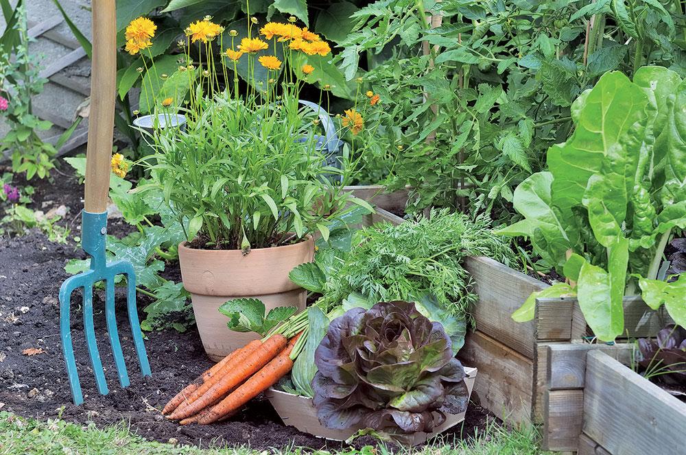 Striedanie plodín: Efektívny spôsob, ako predísť únave pôdy