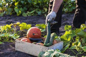 Chceme konzumovať biopotraviny. Oplatí sa ich pestovať?