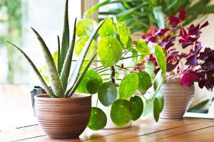 Doprajte izbovým rastlinám starostlivosť aj počas zimného obdobia