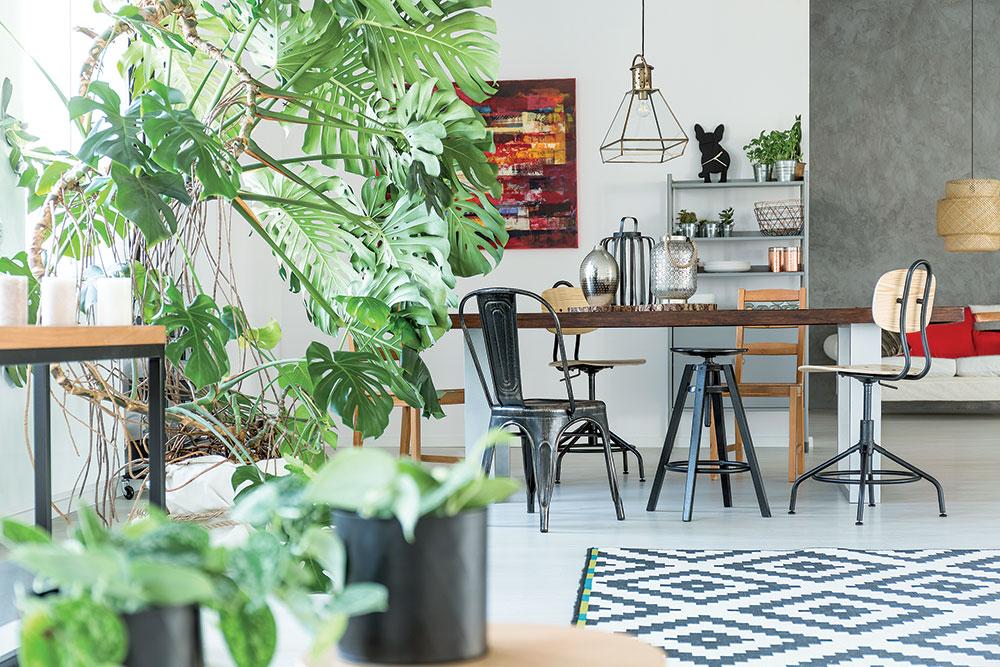 14 rastlín účinných proti jedovatej bytovej chémii