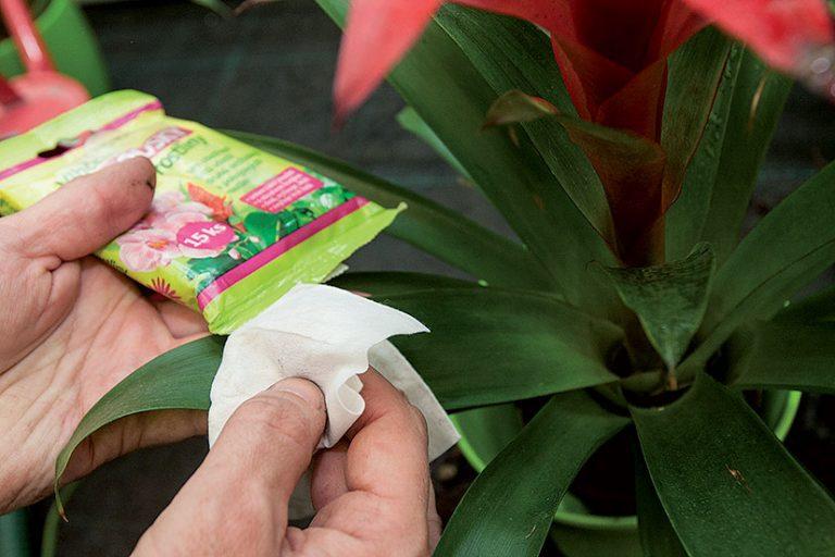 Odstraňovanie prachu z bromélie