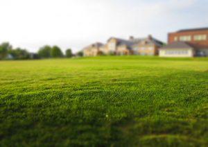 Trávne osivo na obnovu prázdnych miest v trávniku