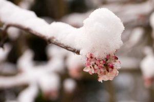 Aj v zime môže byť vaša záhrada inšpiratívna