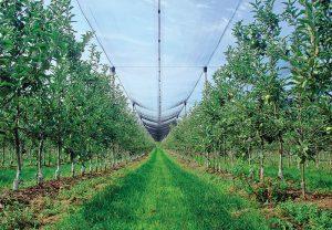 Štíhle vreteno je v súčasnosti najvyužívanejší pestovateľský tvar, naučte sa ho správne rezať