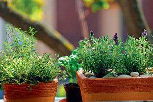 Bylinkovú záhradku môžeme mať aj uprostred mesta