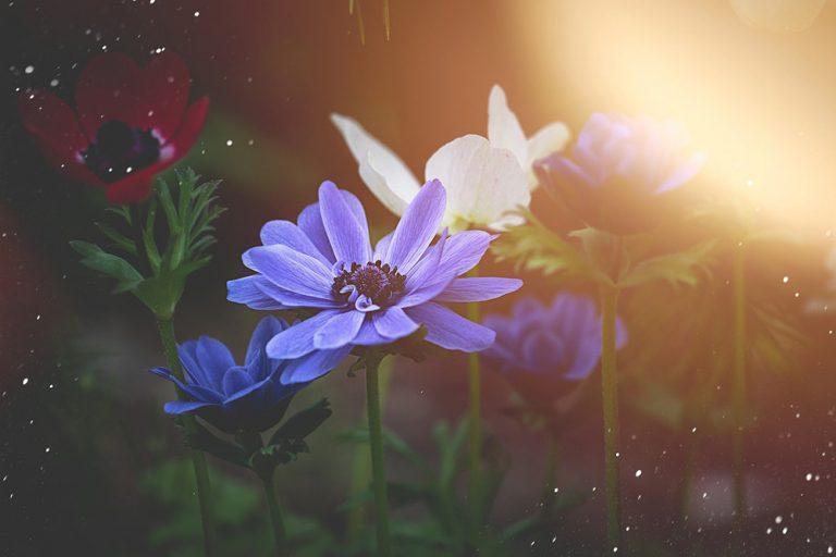 Rozkvitnutý marec: Inšpirujte sa kvetmi jari