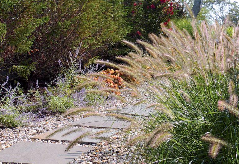 Ako sa postarať o okrasné trávy po zime