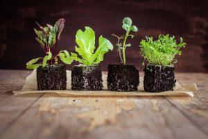 Aj keď pestujeme doma zeleninové priesady a darí sa im, môže nás z ničoho nič zaskočiť ich náhle odumieranie. Poradíme, čo s tým.