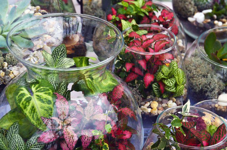 Aktuálny trend: Kúsok tropickej zelene v skle