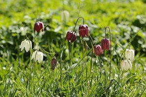 Vyberte si do záhrady tie najkrašie kvety neskorej jari