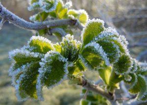 Ako sa pripraviť na jarné mrazy?
