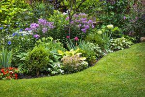 Ochrana rastlín v záhrade