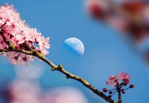 Lunárny kalendár pre záhradu a domácnosť - máj 2018