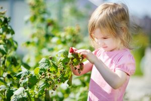 Aké ovocie pestovať v malej záhrade