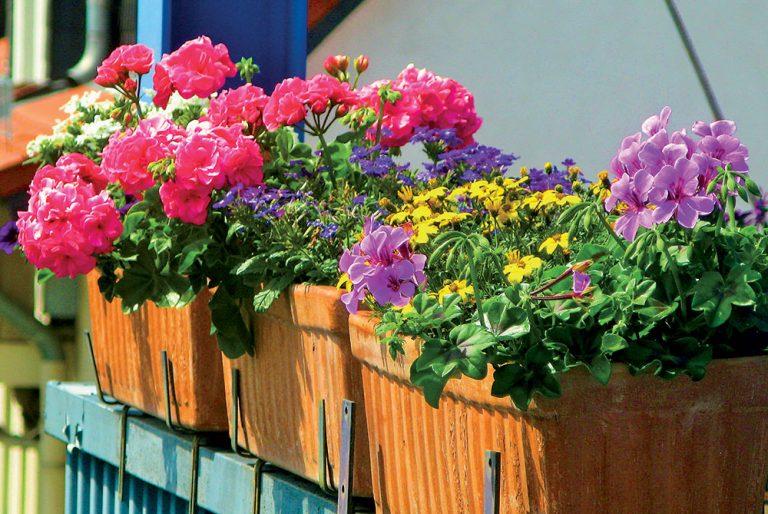 Inšpirácie: Výsadba kvetov na balkón podľa svetových strán