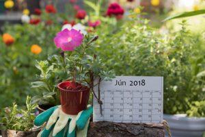 Lunárny kalendár pre záhradu a domácnosť - jún 2018