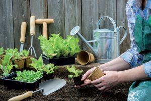 Ako pestovať rôzne druhy šalátov